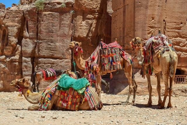 cammelli-petra