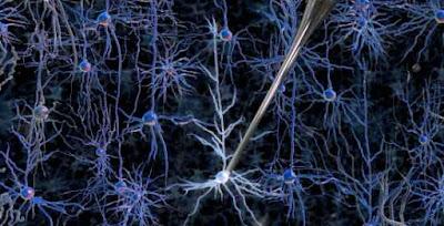 Robot individua neuroni cervello