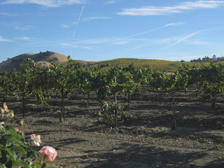 Grapevines and vine-covered hillsides, Panoche Road, Paicines, California