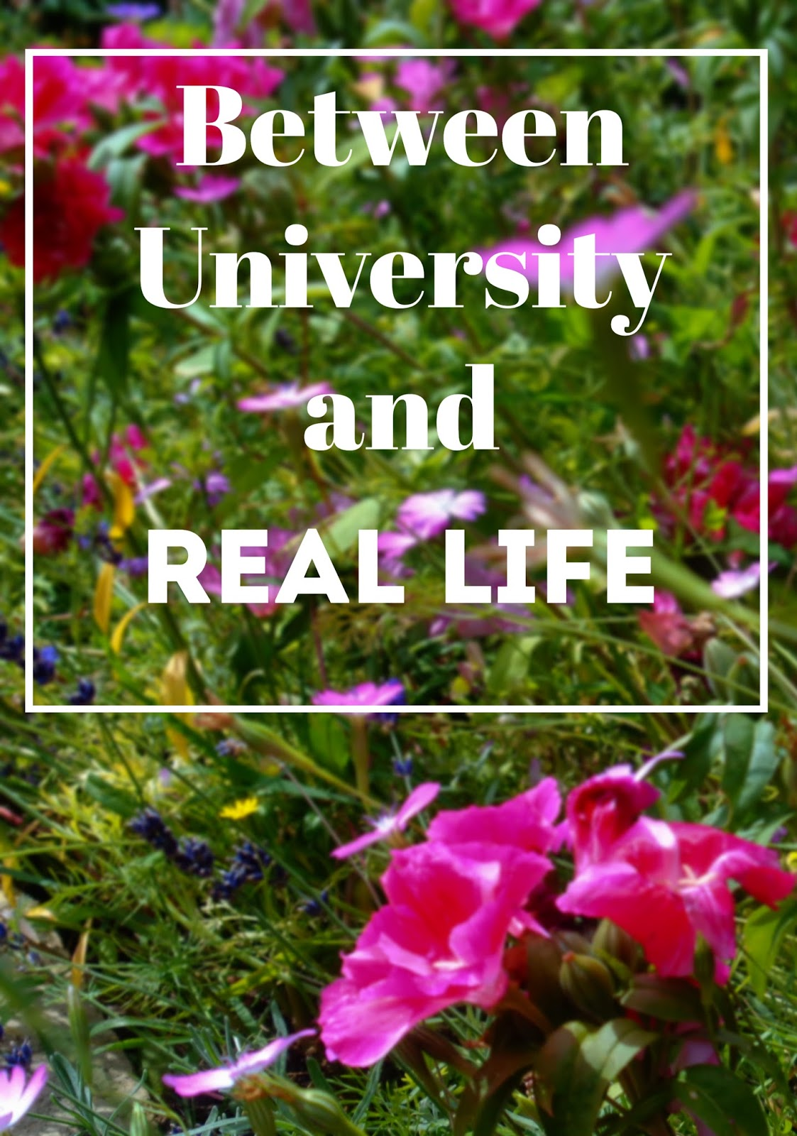Between University and Real Life