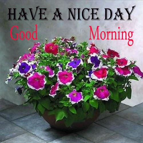 Good Morning Greetings with Petunia Flowers