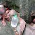 Lalake Sa Negros, Sa Butas ng Ilalim Ng Malaking Bato Na Naninirahan