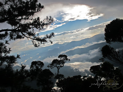 View of the clouds at the Montane mossy forest of Mt. Pulag