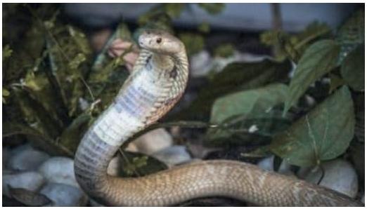 A Polícia Civil do Distrito Federal investiga o caso de um estudante de veterinária, que foi picado por uma serpente em sua casa e internado na UTI em estado grave.