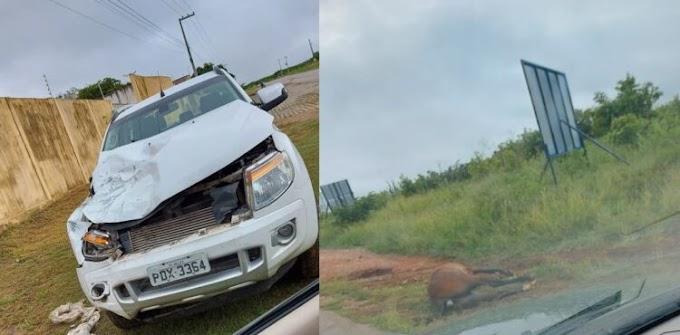 Animal na pista provoca acidente em São José do Egito