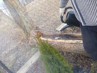 wypalanie kłody drewna na donicę