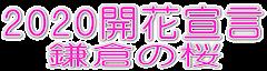 桜の開花・見頃情報
