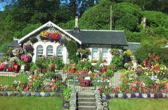 Trồng hoa trong nhà thế nào là thích hợp nhất