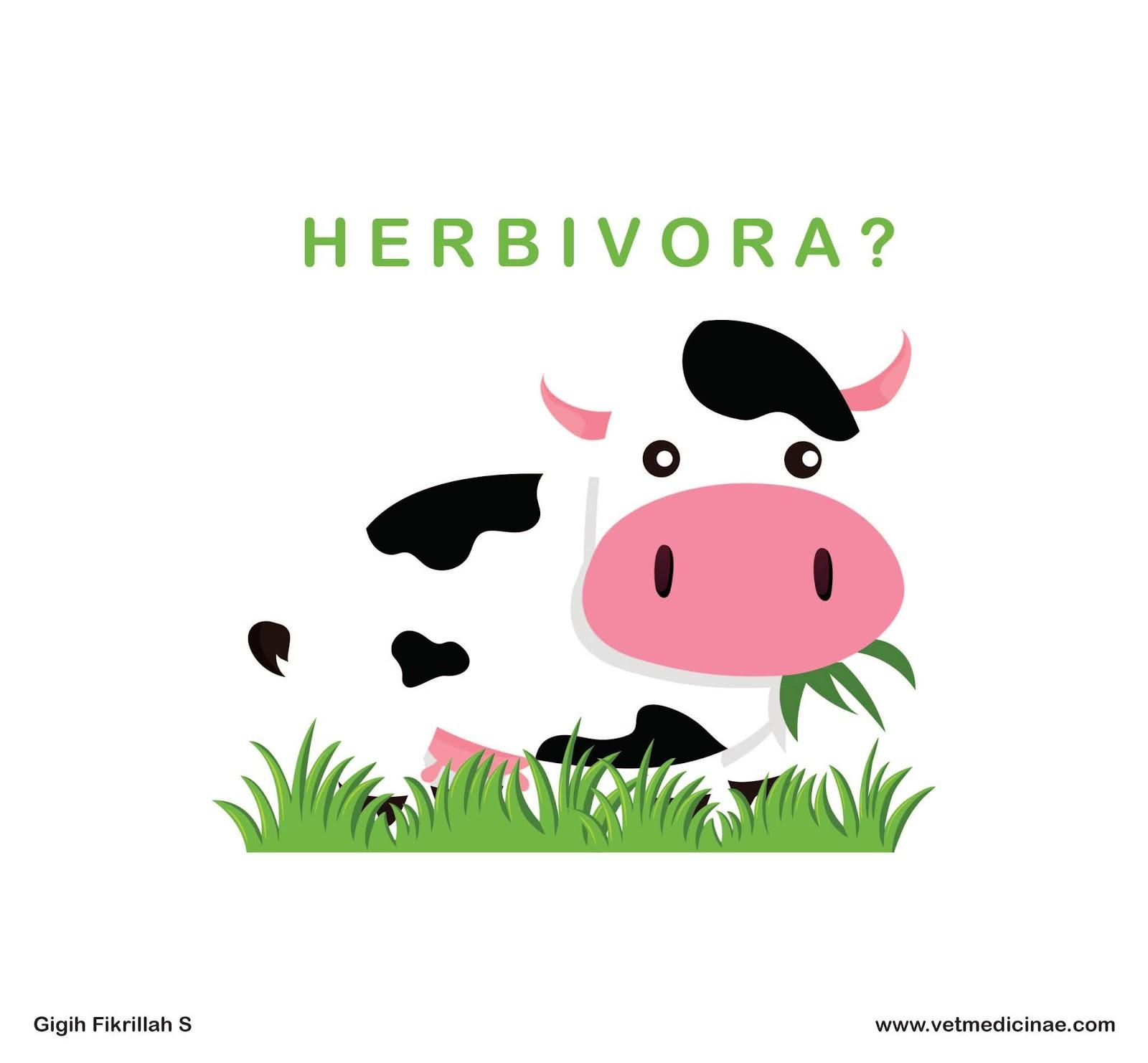 Gambar Hewan Herbivora Dan Makanannya Gambar Hewan