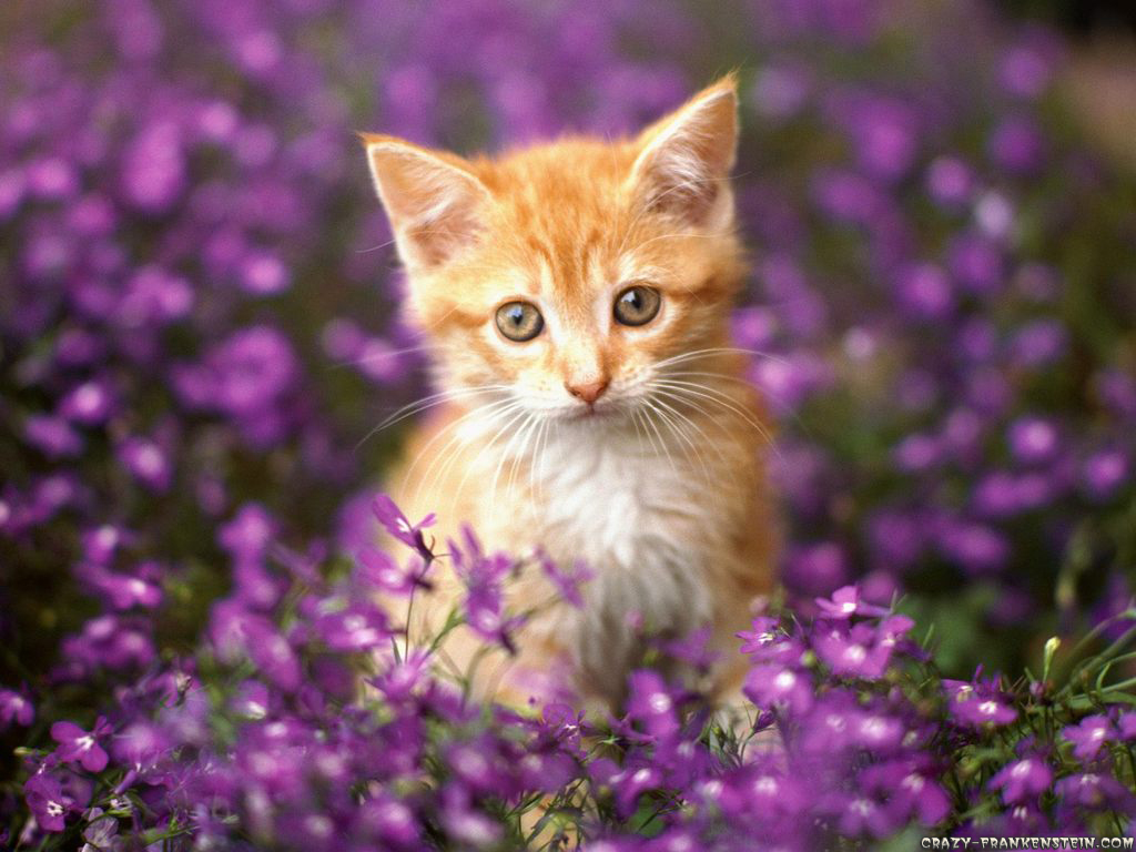 Wallpaper gallery cat kittens wallpaper 3 - Kitten backgrounds ...