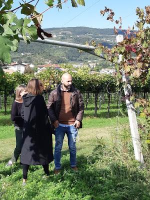 wine blog sommelier