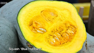 Squash Blue Hubbard