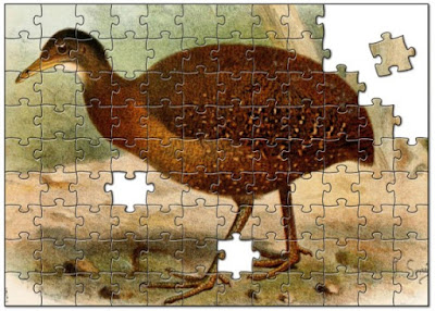 Evolutionists tell stories that some birds lost the ability to fly due to the secular miracle of convergent evolution. They even claim that loss of traits is evidence for their beliefs.
