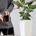 Tanaman Bisa Cas Ponsel Sekarang, Sudah Ada Teknologi Untuk itu
