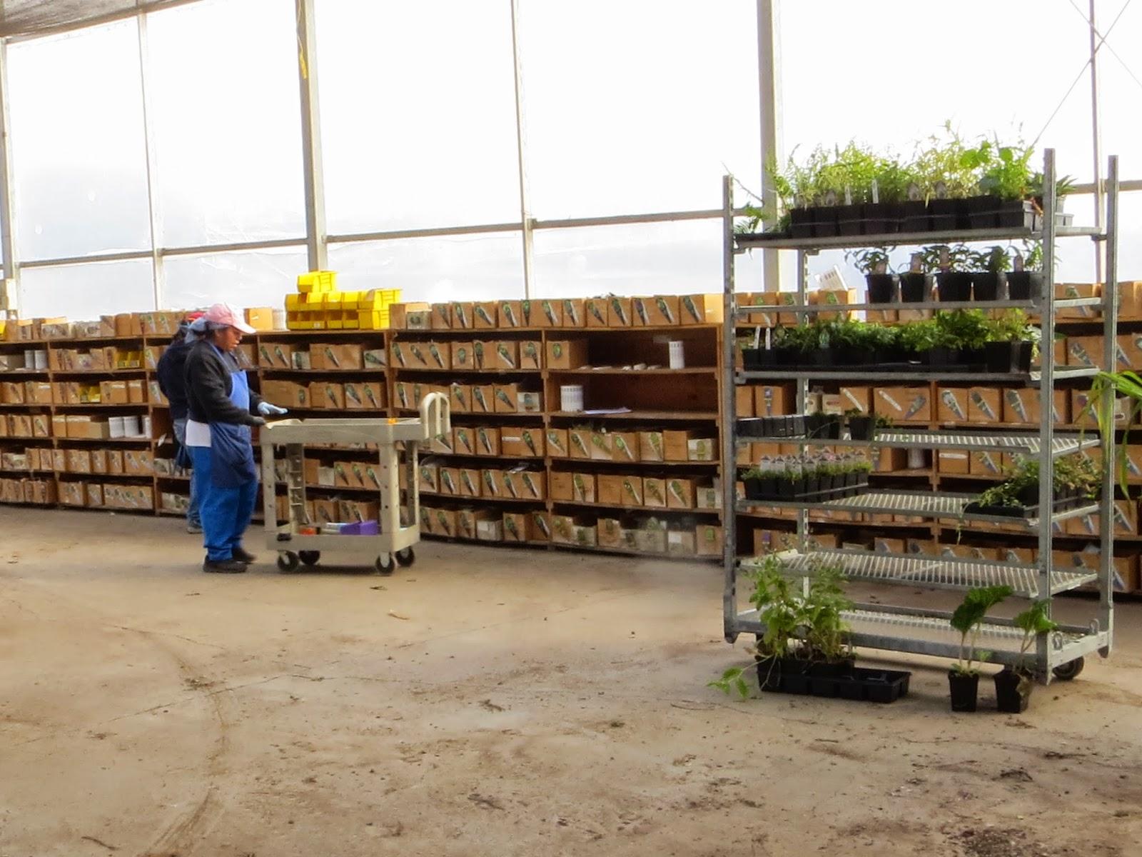 A Local Wholesale Nursery: Little Prince of Oregon