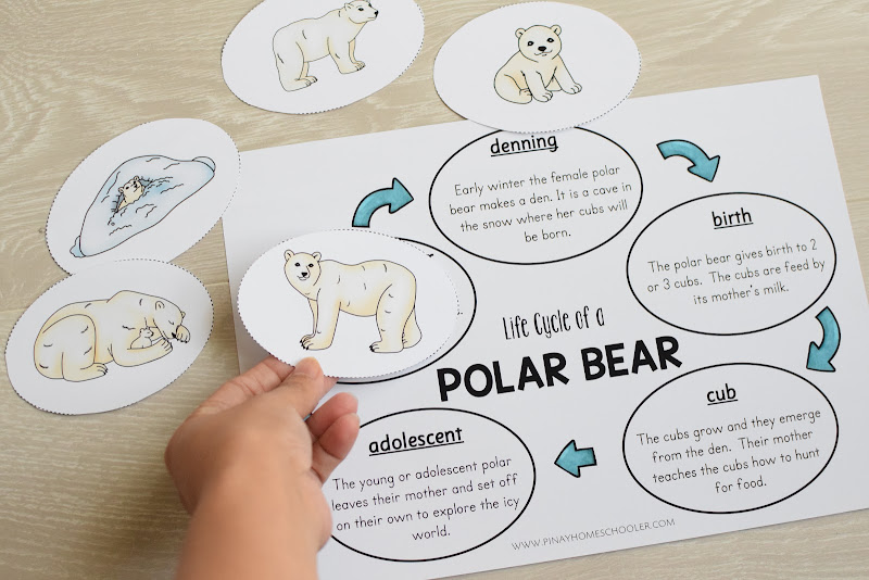 Polar Bear Life Cycle