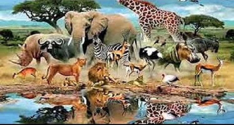5 حيوانات امرنا الرسول بقتلها حتى لو كنا فى الحرم او فى الصلاة اعرف لماذا