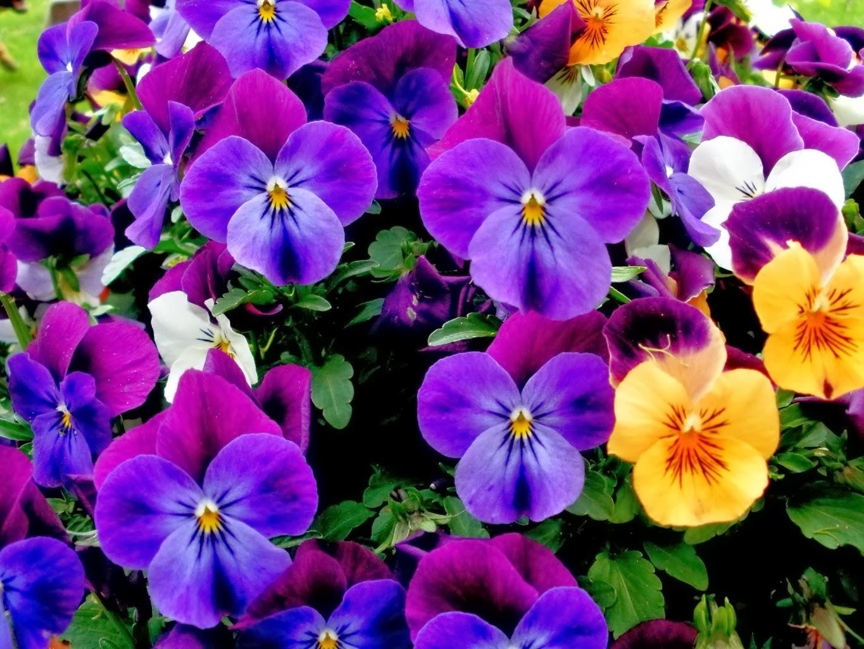 PlantaMer: Los Colores De Las Flores