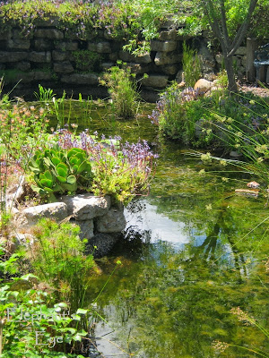 Ungardening Pond with Pani's Falls