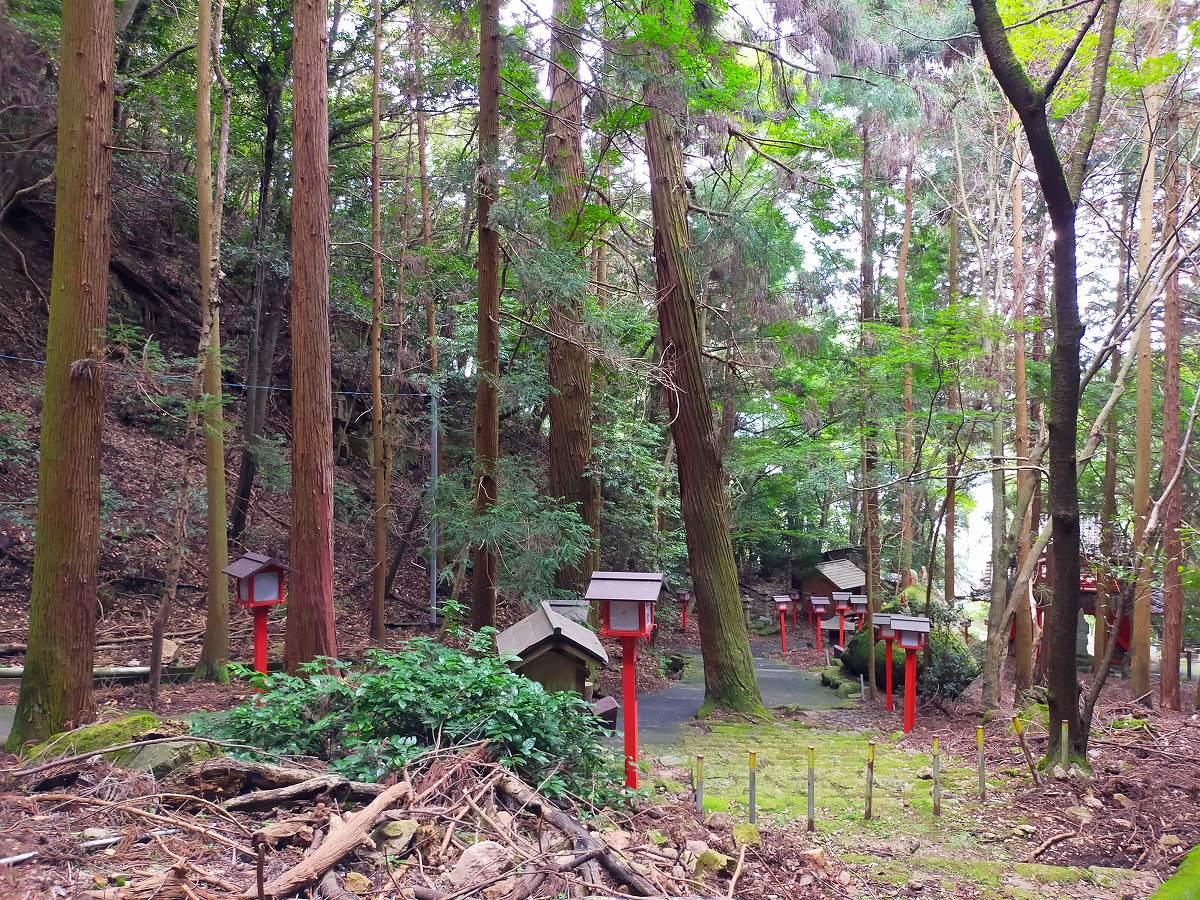 上から見下ろす赤い灯籠の道。