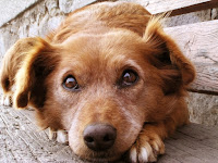 Rüyada Köpeğin Ölmesi