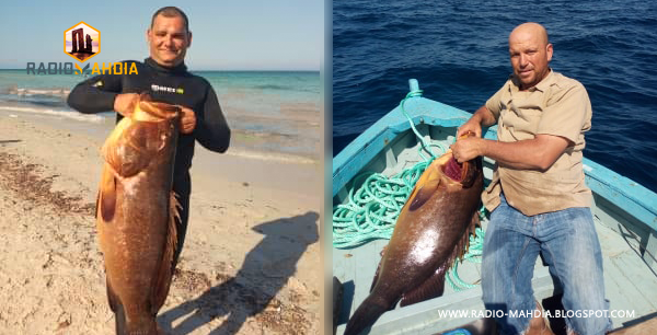 """بالصور .. اصطياد أكبر سمكة """" مناني """" في رجيش"""