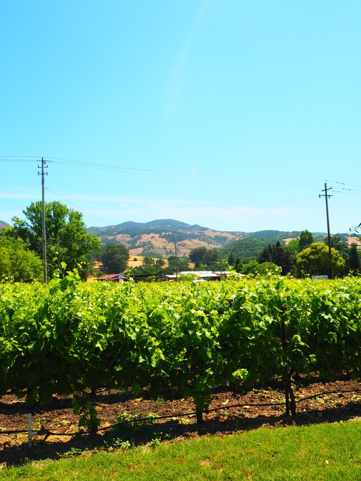 Wine Tasting In Sonoma Valley
