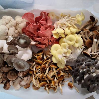 Gourmet mushroom supplier