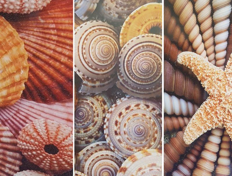 Panone Farben -  Sommer 2020: Muscheltöne