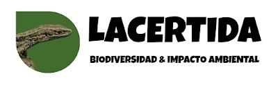 www.lacertida.com