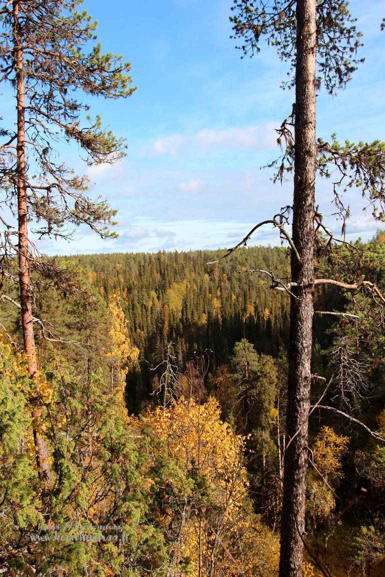 Pieni karhunkierros Oulangan kansallispuisto