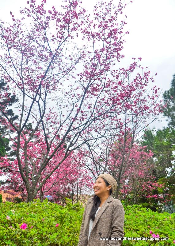 Cherry Blossoms in Chiang Kai-Shek Memorial Hall