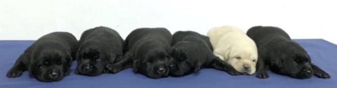 이미지에 대체텍스트 속성이 없습니다; 파일명은 police-department-recruited-new-police-puppies-and-the-internet-is-falling-in-love-with-them-01-1.jpg 입니다.