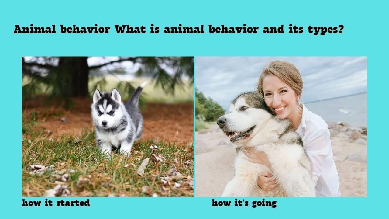 Animal behavior What is animal behavior and its types?