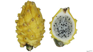 gambar buah naga kuning