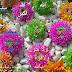 Beautiful Flower Pictures must see and share