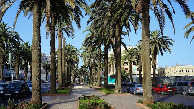 Изображение пальм на бульваре Альмоад в Касабланке, Марокко