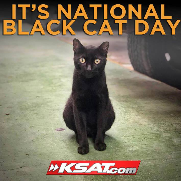 National Black Cat Day Wishes Lovely Pics