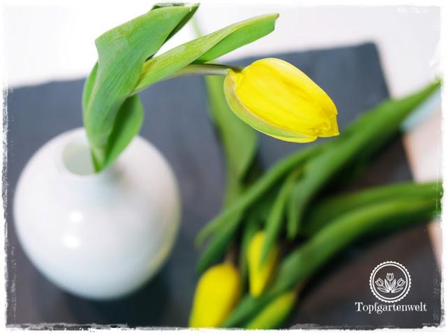 Gartenblog Topfgartenwelt Valentinstag: gelbe Tulpe in weißer Vase