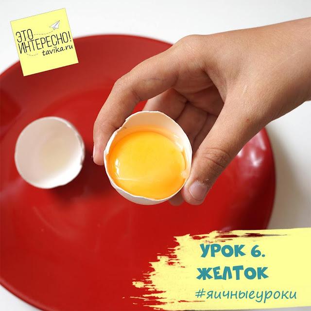 о желтке для детей