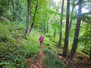 kirándulás, tippek, tanácsok, túratippek, erdőjárás, erdő, termszetjárás, természet, pilis