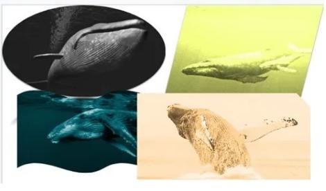 Cara Mudah Membuat Foto Kolase di Google Slide 12