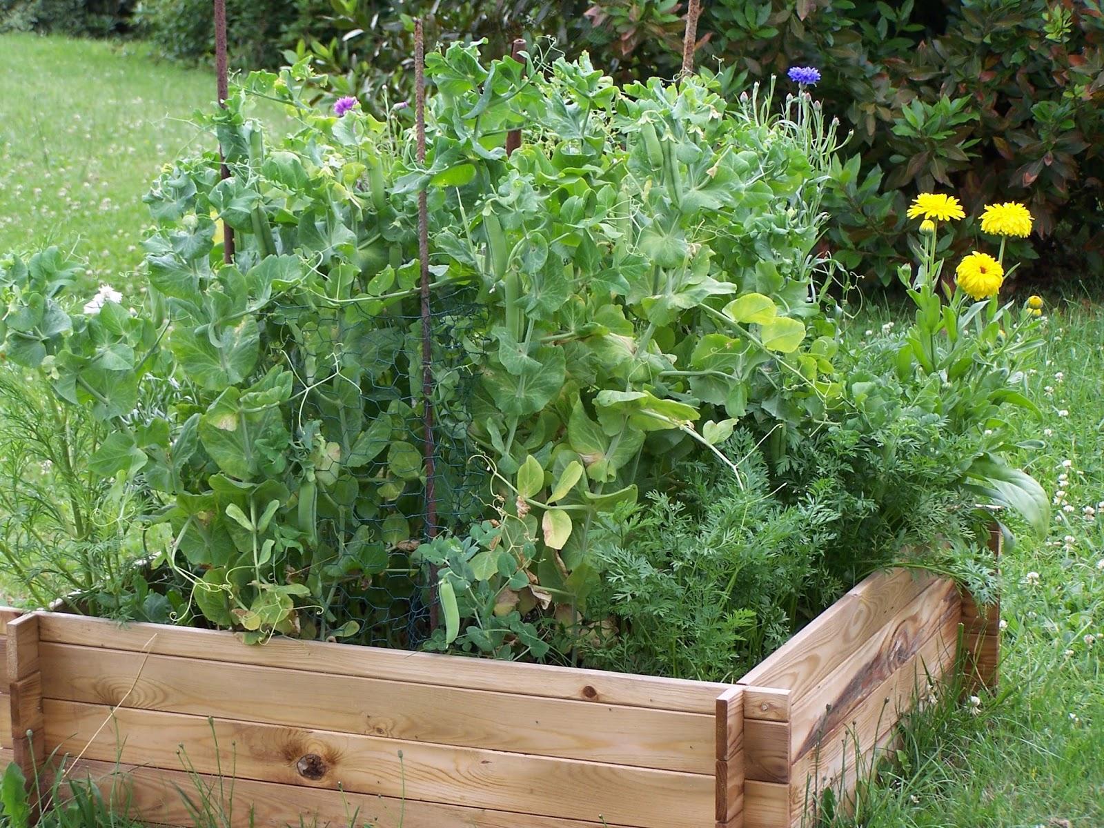 Que semer en juillet stunning que semer en juillet with que semer en juillet stunning semis au - Que planter en juillet au potager ...