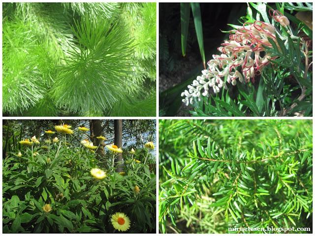 Цветочный Купол, Сингапур - Австралийский сад