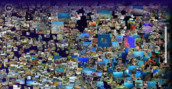 Google Arts & Culture e a UNFCCC lançam novo conjunto de experiências climáticas