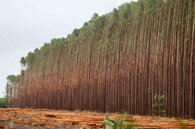 Presente no cotidiano de 100% dos brasileiros, a madeira é um dos materiais mais versáteis utilizados pelo homem desde o início das civilizações.