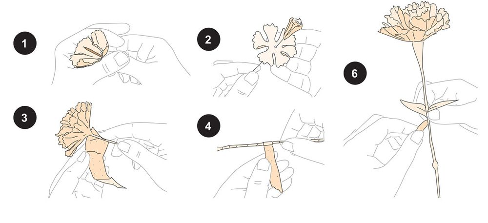 Step by step: This is how you make the paper flowers