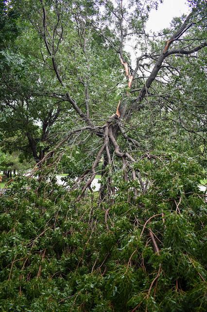 Hurricane storm damage