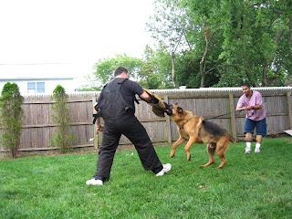 Las herramientas básicas de entrenamiento canino