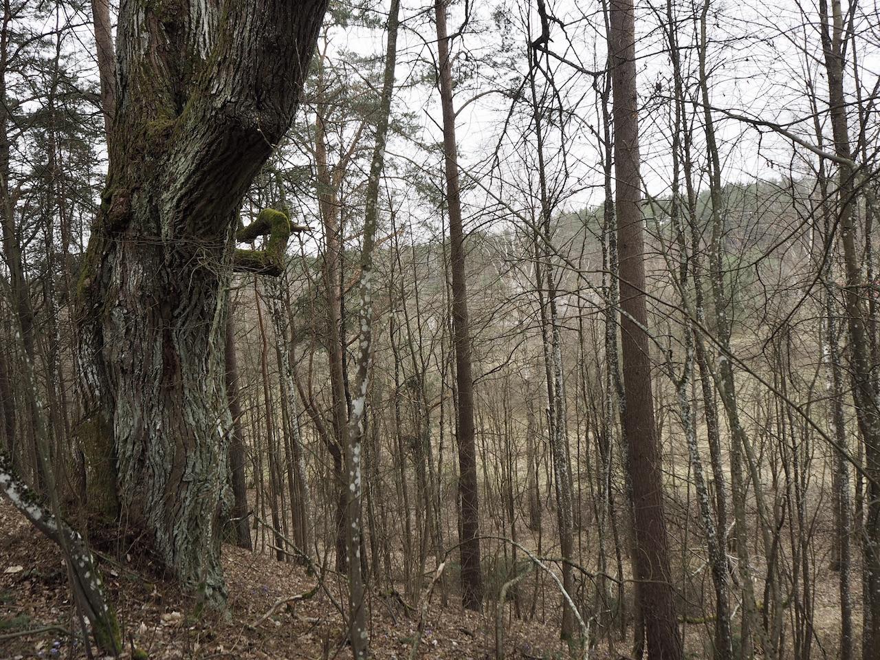 Staviškių piliakalnis